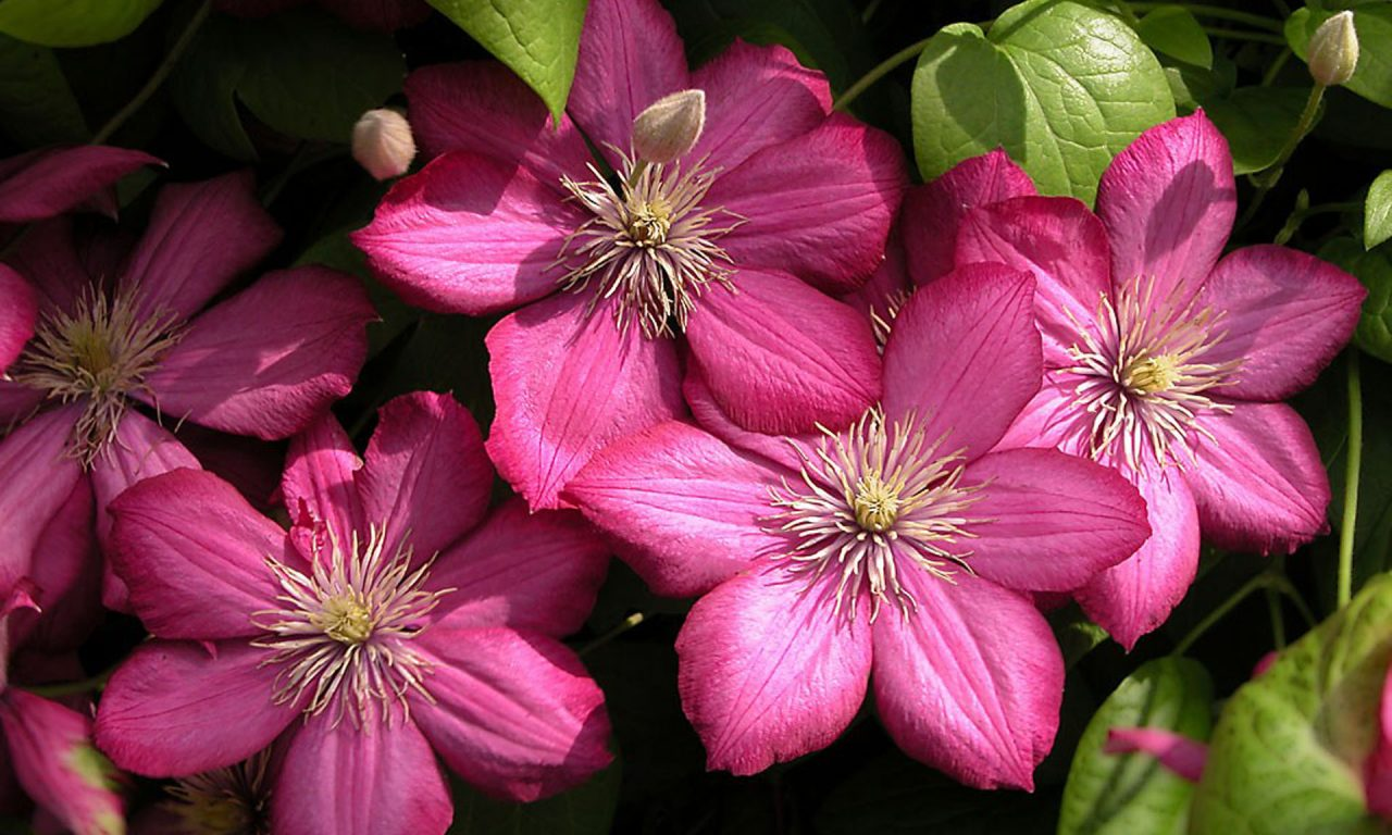 Beautiful Flower Wallpapers Mobile Phone Labzada Wallpaper - Beautiful Laptop Hd , HD Wallpaper & Backgrounds