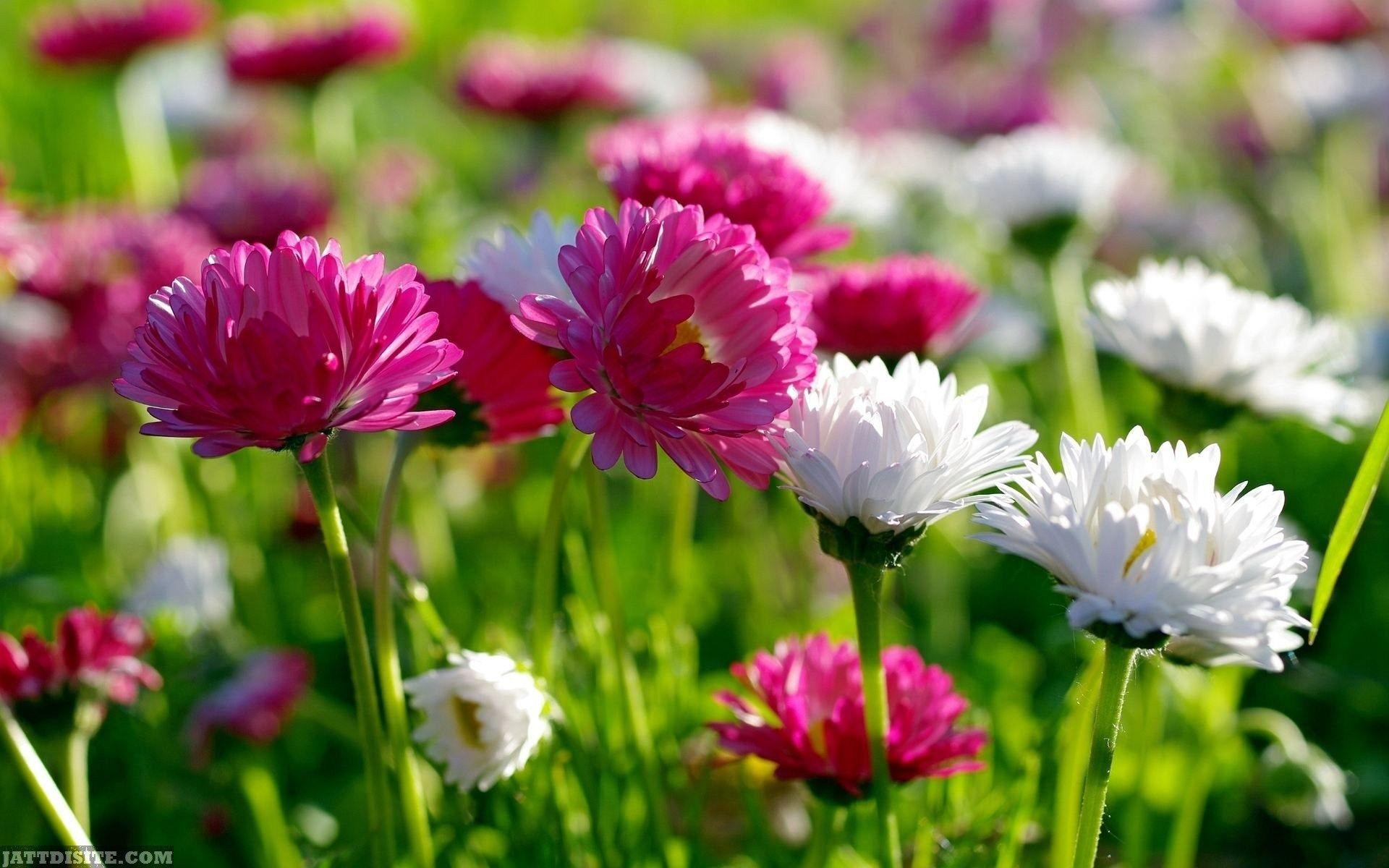 Beautiful Flowers Wallpapers Gzsihai - Beautiful Flowers Hd Wallpapers Download , HD Wallpaper & Backgrounds