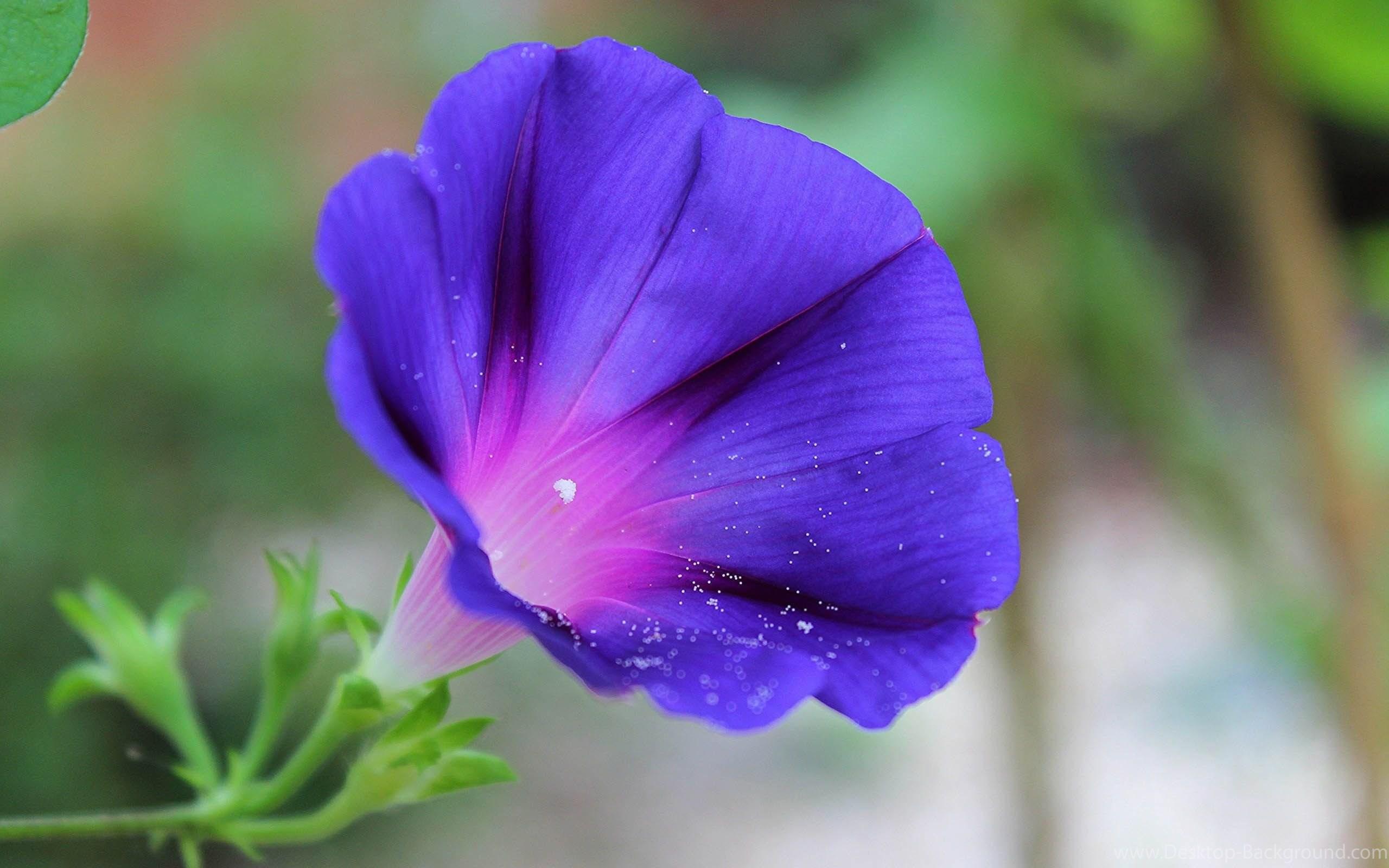Original Size - Bluebells Flower Images Hd , HD Wallpaper & Backgrounds