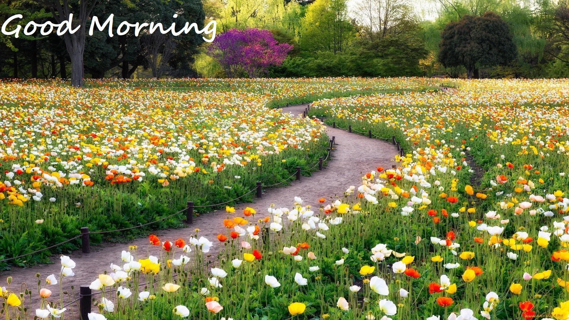 Flowers Gardens Wallpapers For Desktop Full Size - Wallpaper , HD Wallpaper & Backgrounds