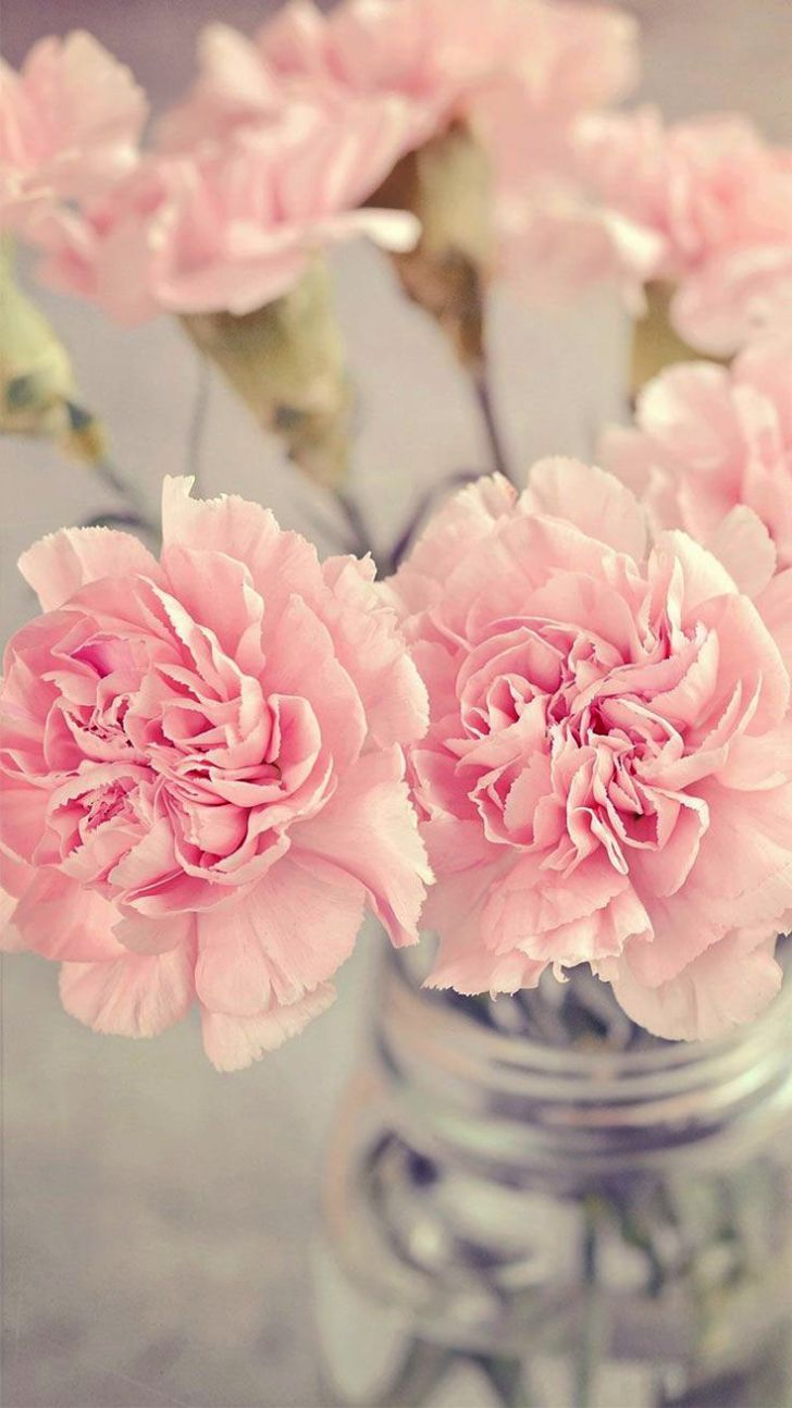 Beautiful Flower Wallpaper For Android Phone Floral - Iphone Background Pink Flowers , HD Wallpaper & Backgrounds