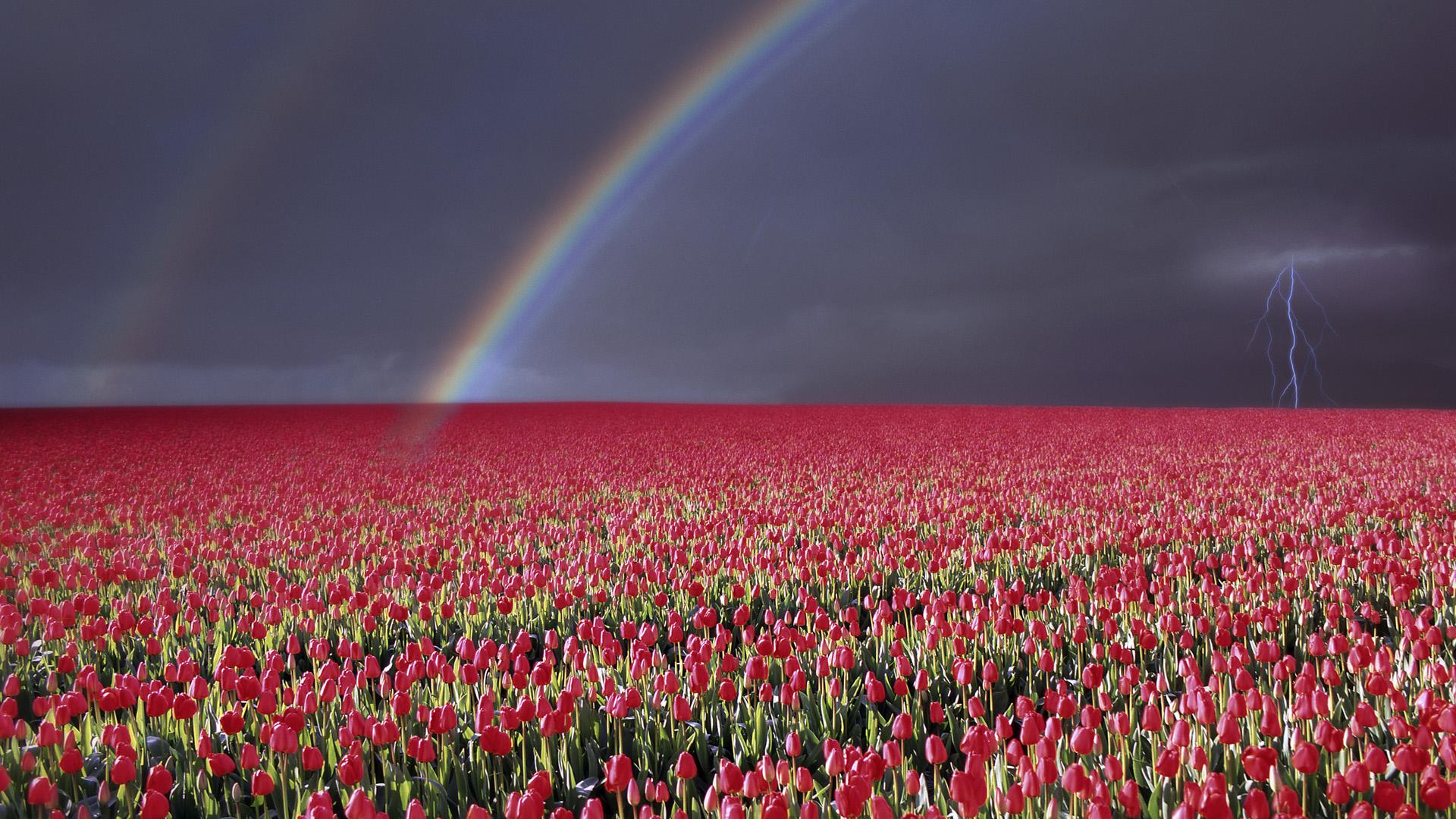 Wallpaper Hd Free For Desktop Of Flowers - Field Of Flowers Rose , HD Wallpaper & Backgrounds