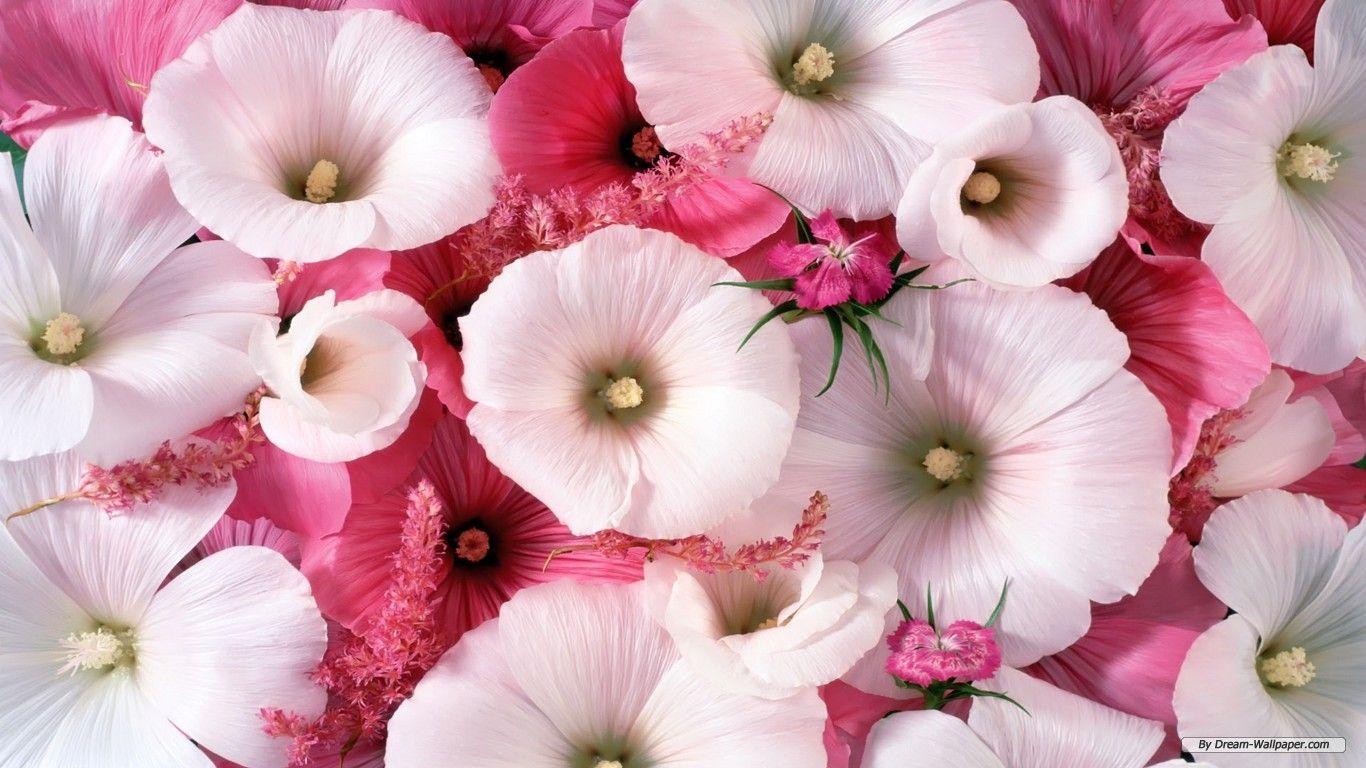 4k Ultra Hd Beautiful Flowers Wallpapers Free Download - Download Beautiful Wallpapers Of Flowers , HD Wallpaper & Backgrounds