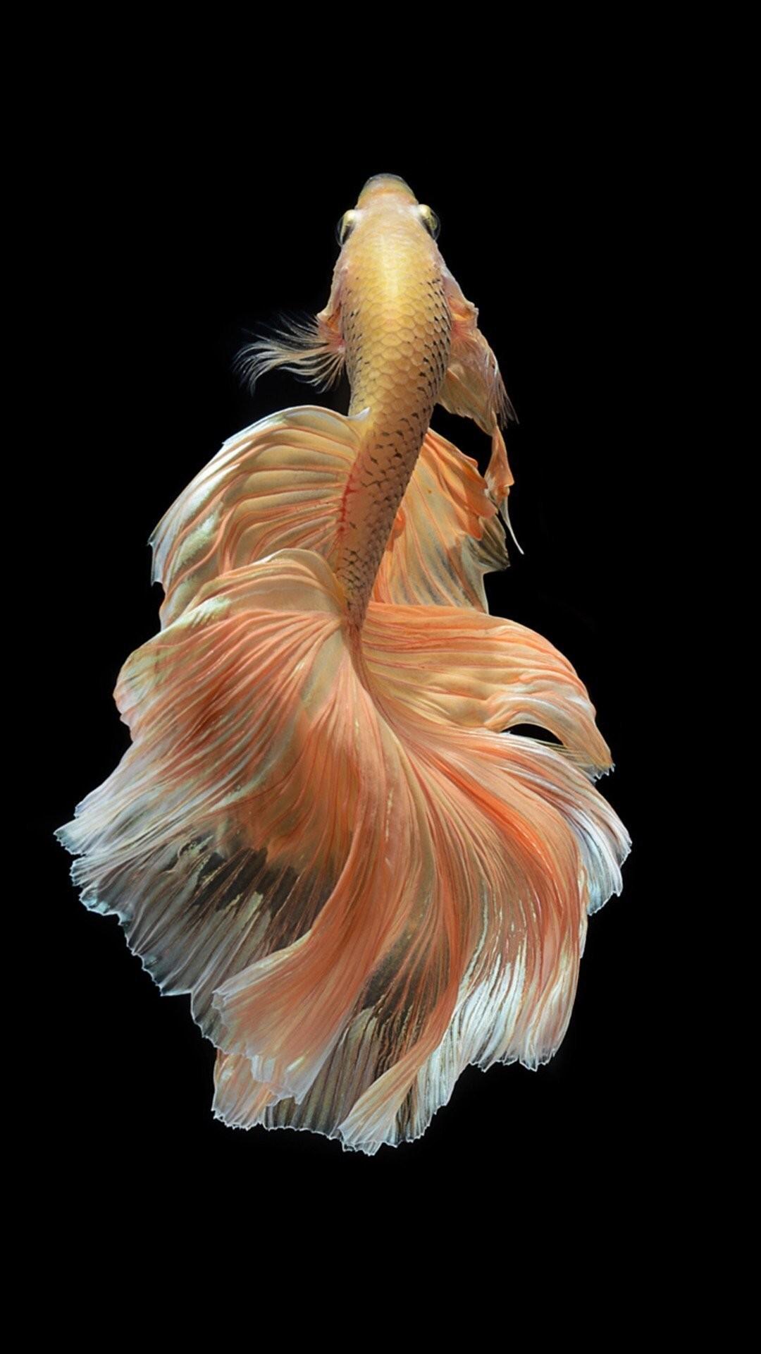 Iphone Fish Live Wallpaper 368471 Hd Wallpaper