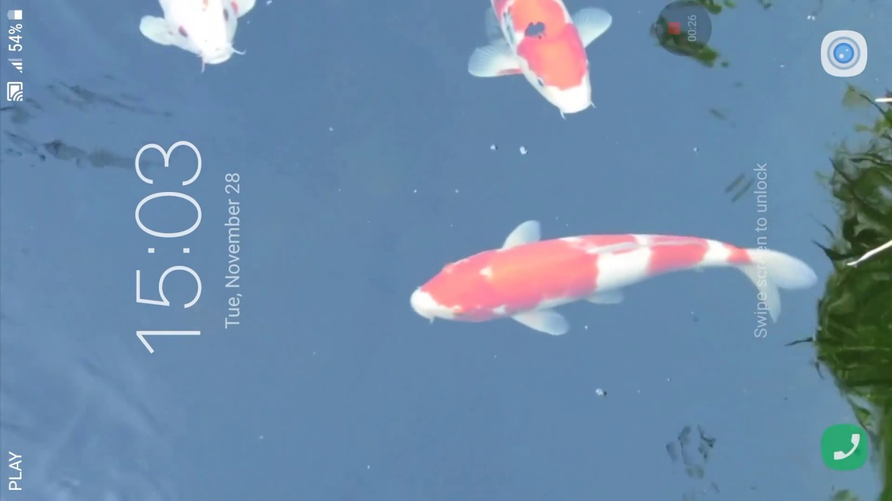 Koi Fish Live Wallpaper - Koi , HD Wallpaper & Backgrounds