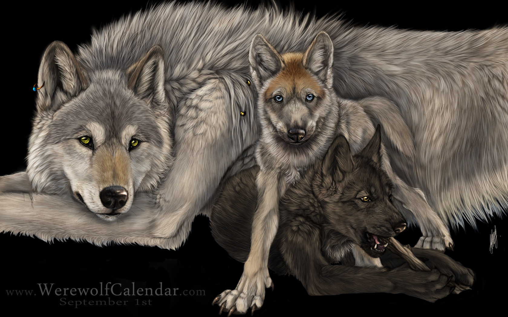 Serigala Serigala Wallpaper Hd Wallpaper And Wolves