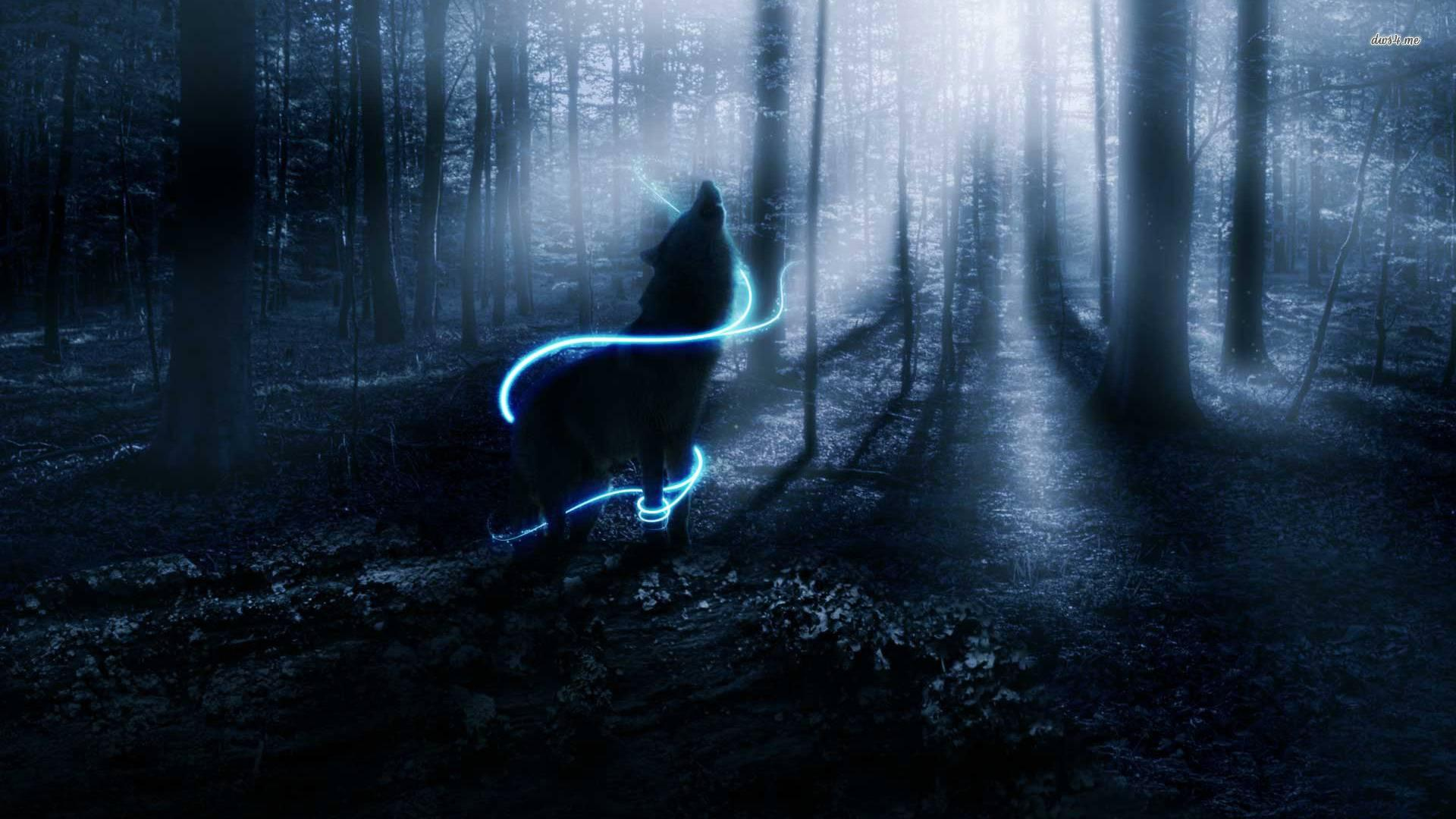 lone wolf hd wallpaper wolf in the