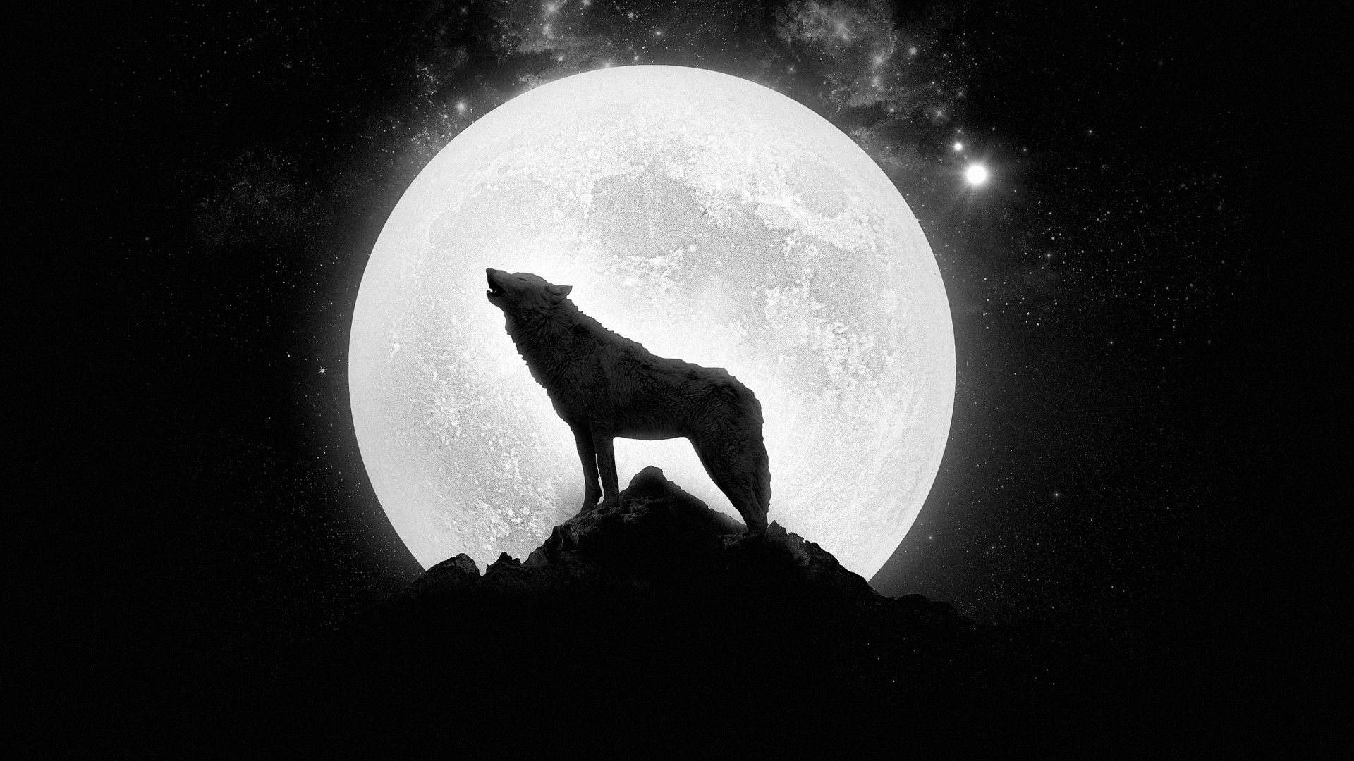 lone wolf wallpapers hd