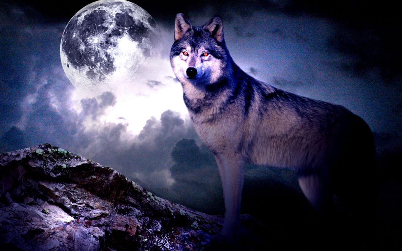 3d Wolf Wallpaper Apk Download 369132 Hd Wallpaper Backgrounds Download