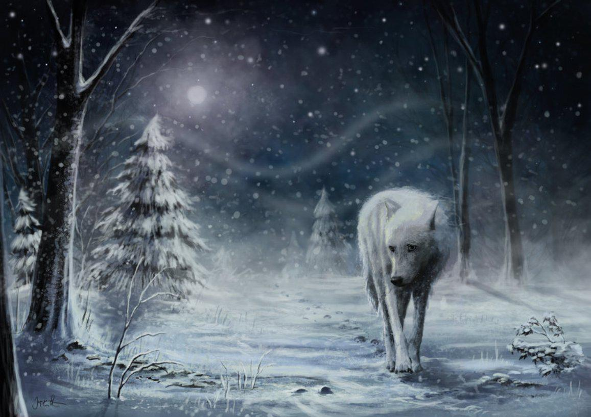 Lone Wolf Wallpapers Source - Wolf Lonely , HD Wallpaper & Backgrounds
