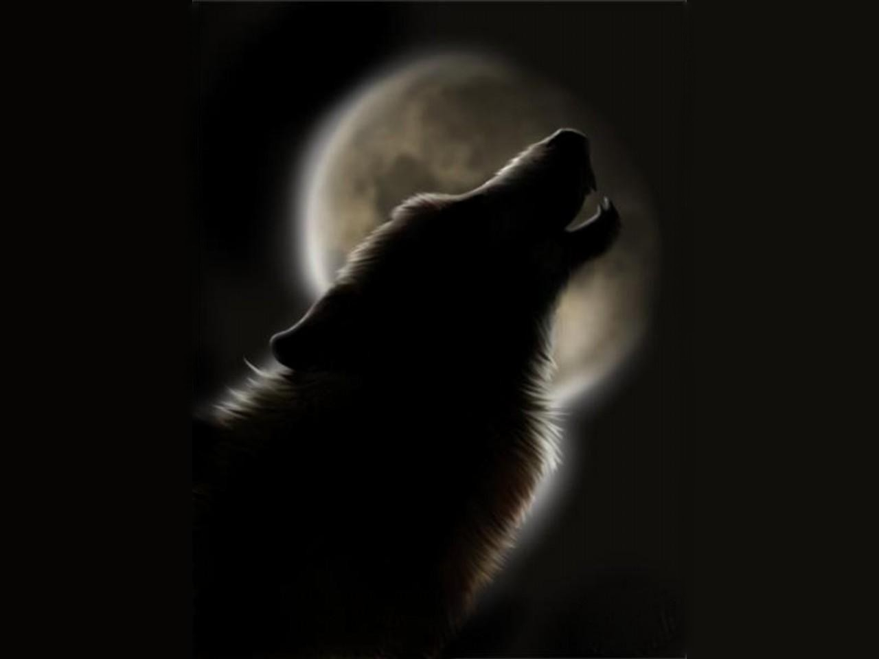 Howling Wolf Wallpapers Wolves Howling Quotes 369900 Hd