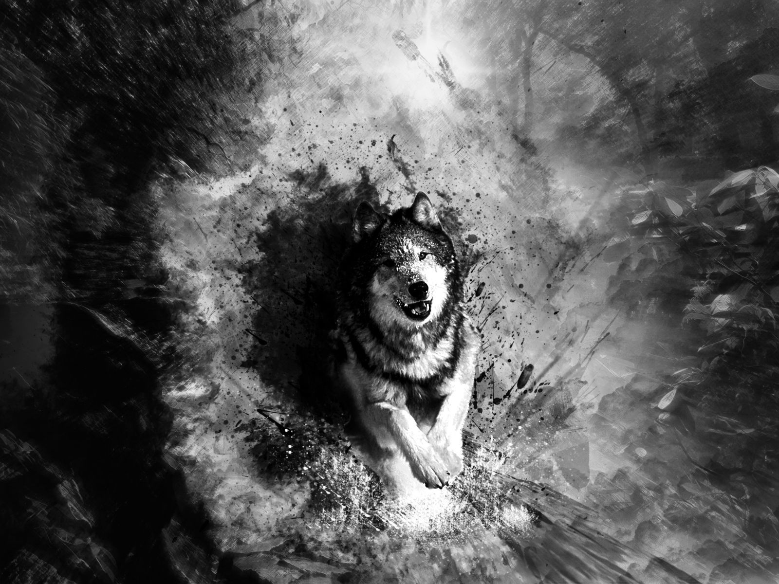 Wolf Wallpaper Black And White Wolf Print 369902 Hd Wallpaper Backgrounds Download