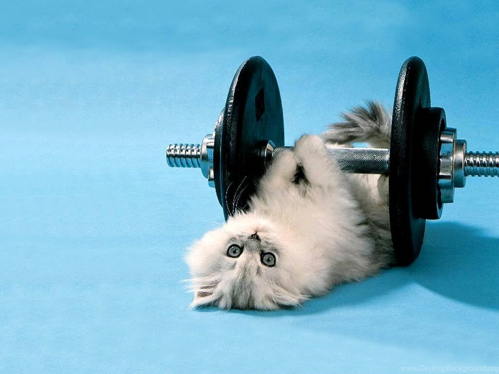 Cat Lifting Weights Gif 371979 Hd Wallpaper Backgrounds
