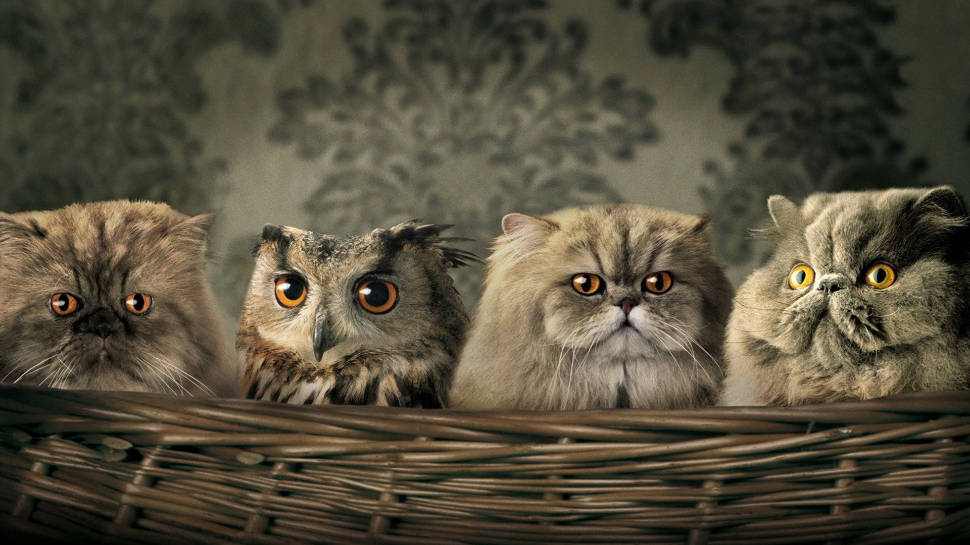 Cute Funny Animal Wallpapers - Funny Animal Desktop , HD Wallpaper & Backgrounds