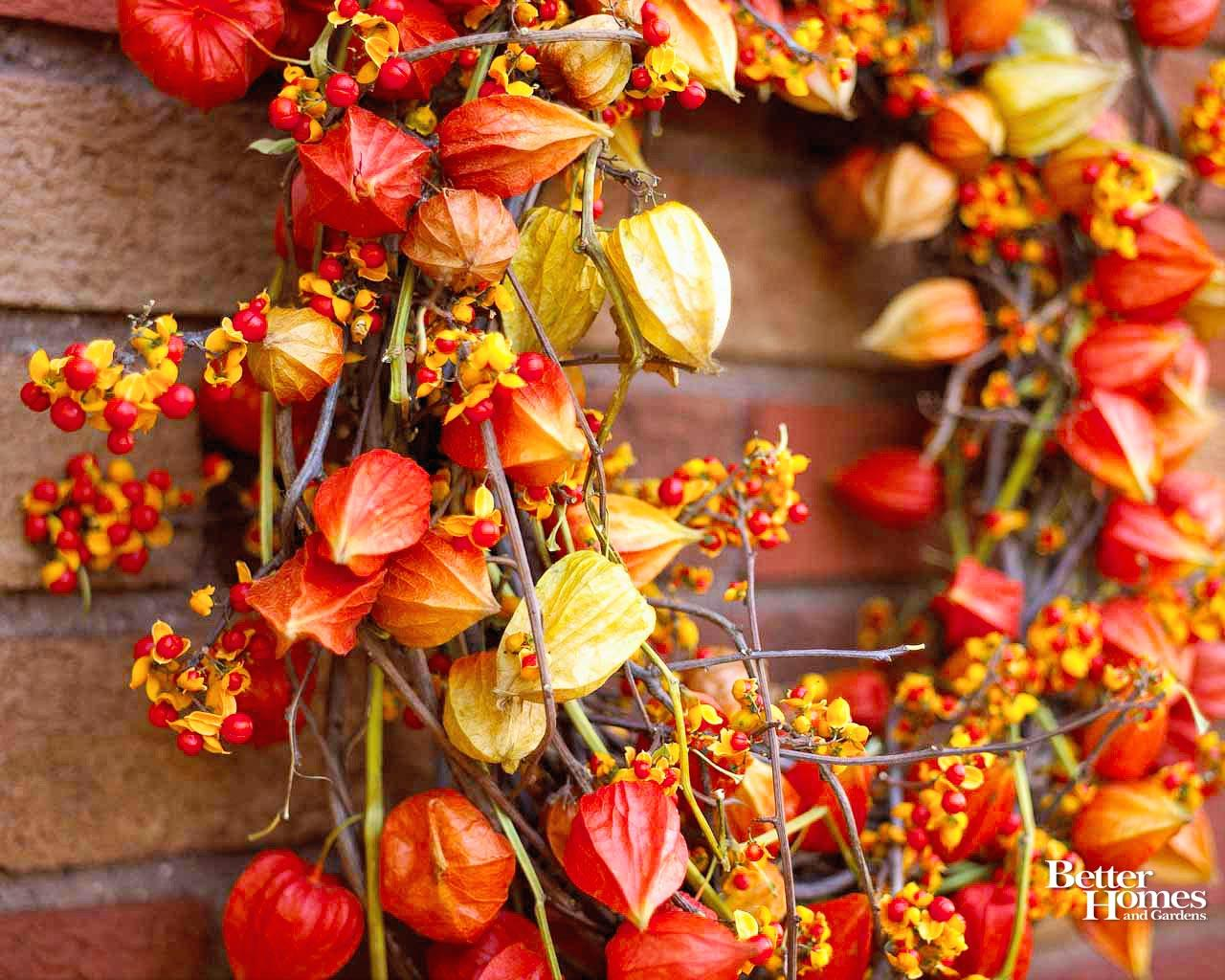 Fall Chinese Lantern Flower Arrangement 378142 Hd Wallpaper Backgrounds Download