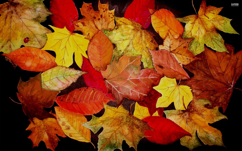 Fall Wallpaper Autumn Leaves Desktop Background High Resolution Autumn 378200 Hd Wallpaper Backgrounds Download