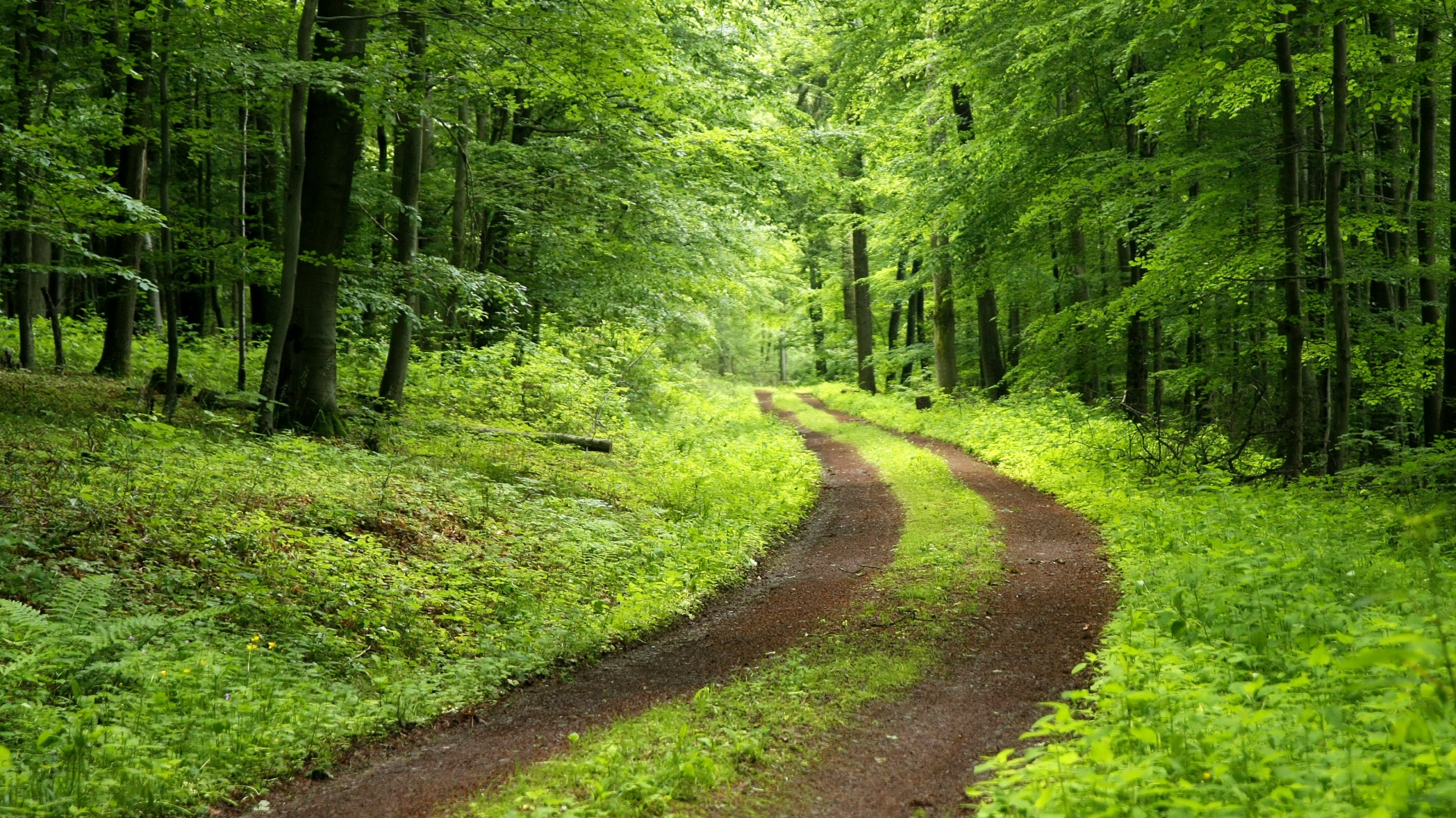 Download Nature Forest Hd Background Pics