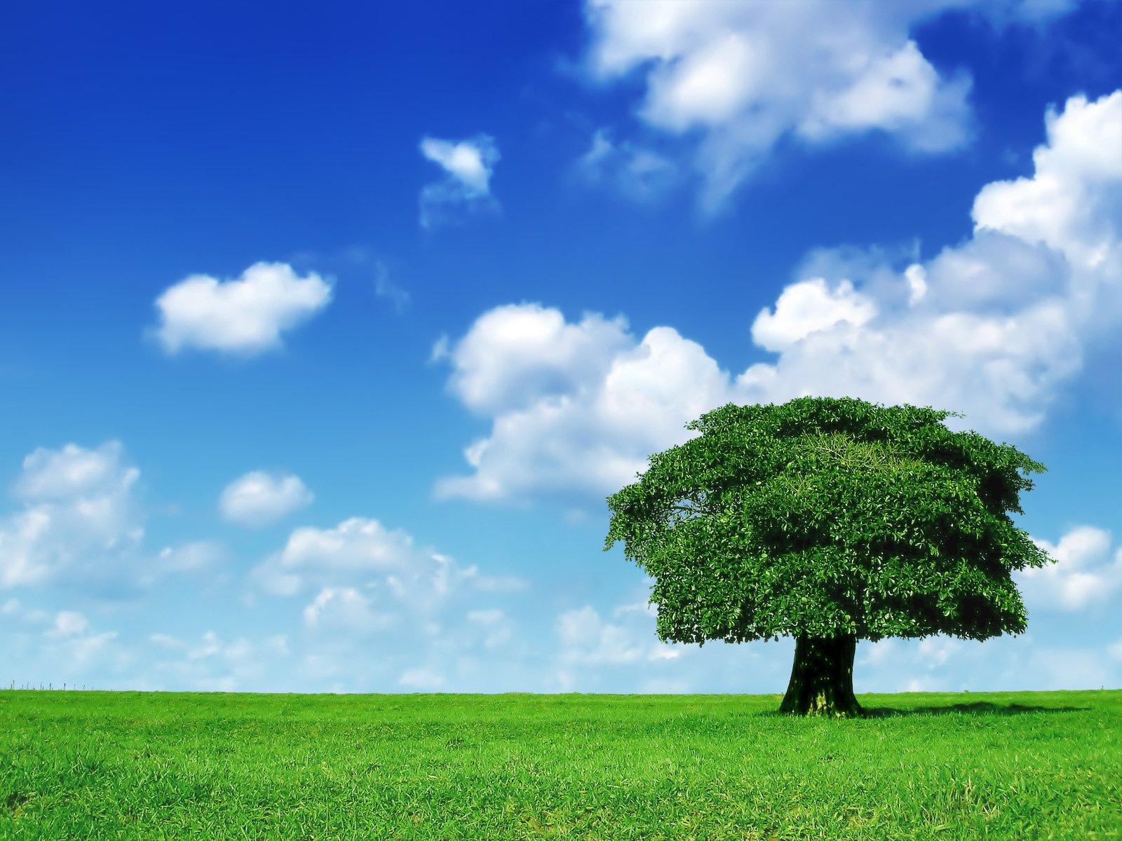 Hd Wallpaper - Grass And A Tree , HD Wallpaper & Backgrounds