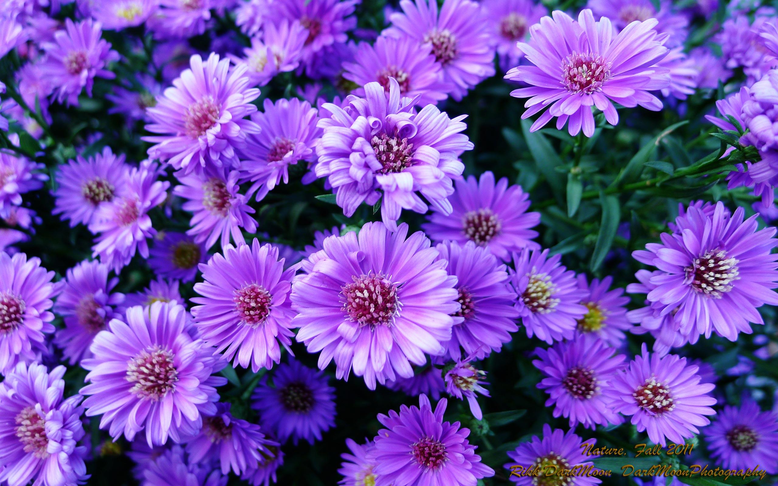 Aesthetic Anime Desktop Wallpaper Purple Flowers 386018 Hd