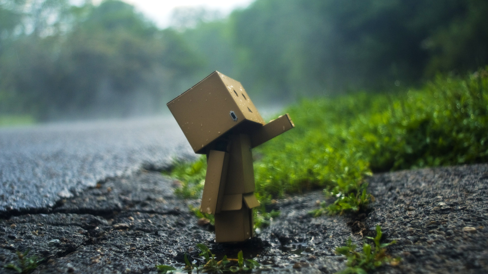 Danbo Hd Wallpaper My Desktop Windows 7 386732 Hd