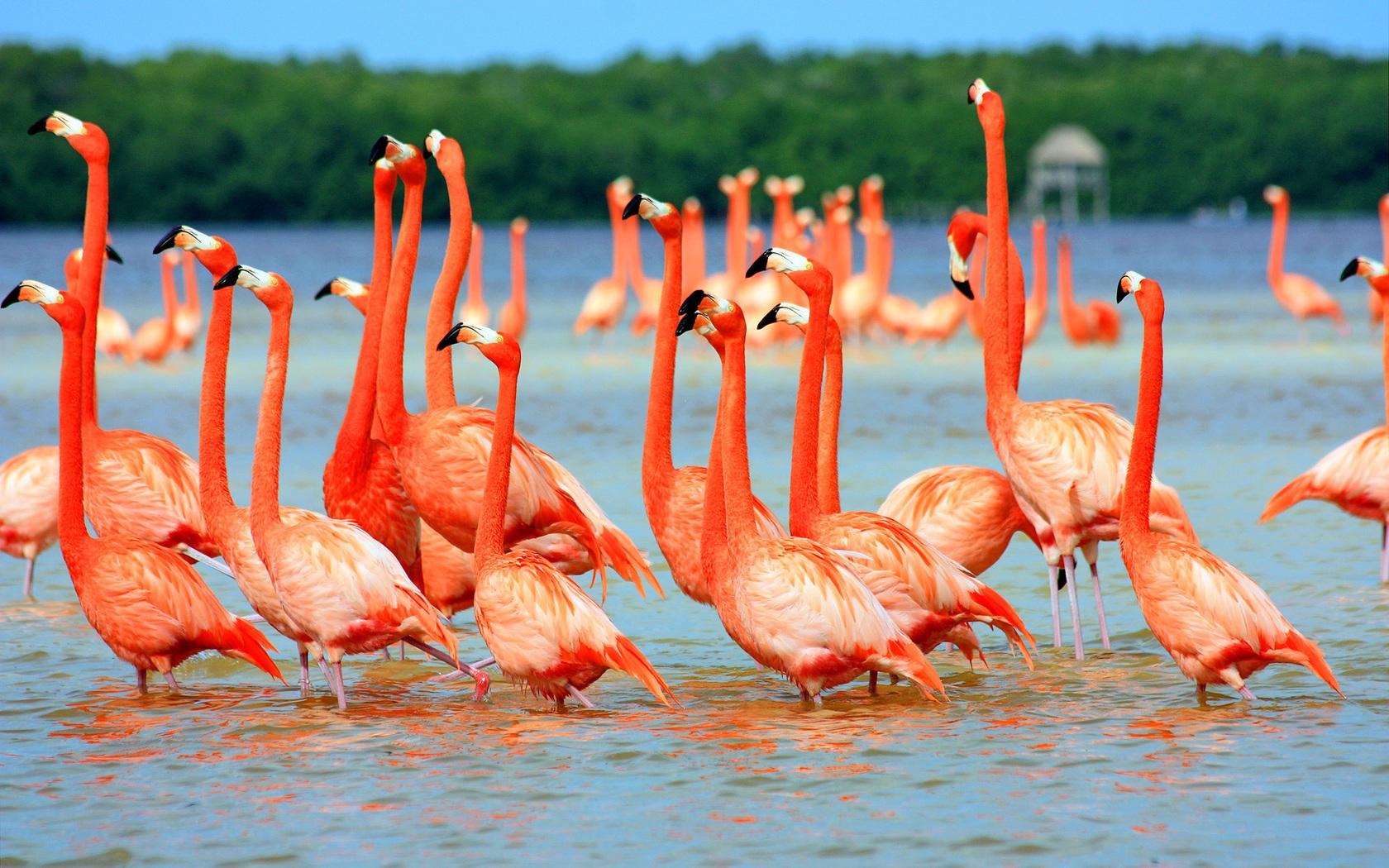 Pink Flamingo Birds In Water Nature Birds Wallpaper Hd