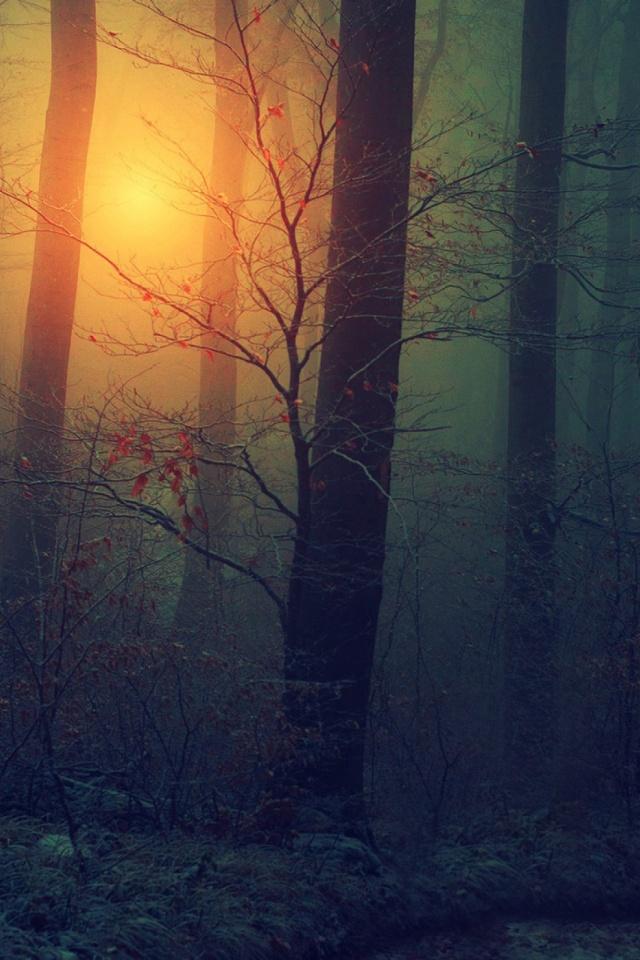 Download Now - Phone Wallpaper Mist , HD Wallpaper & Backgrounds