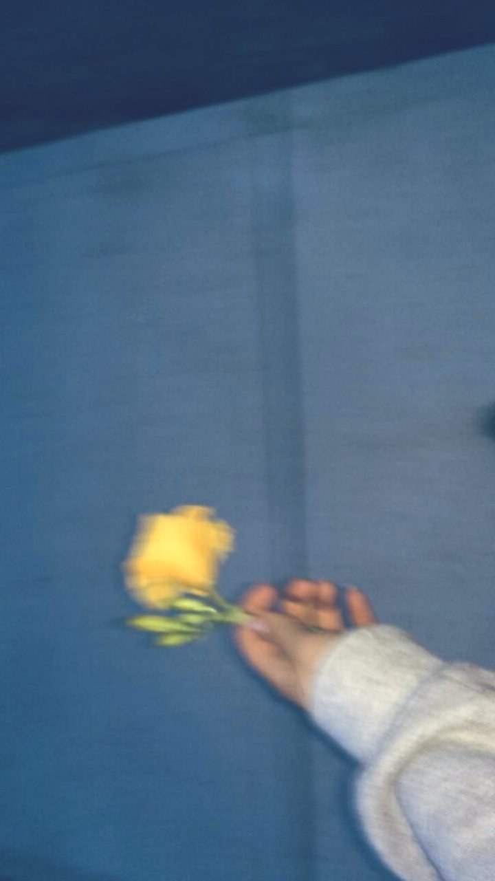 Iphone Wallpapers - Garden Roses , HD Wallpaper & Backgrounds