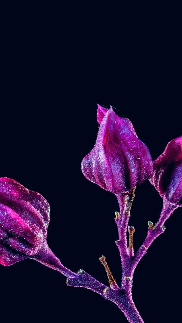 Dark - Red Purple Nature Iphone Wallpaper Hd , HD Wallpaper & Backgrounds