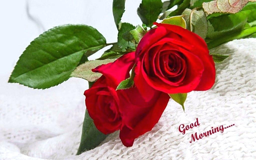 Best Love Roses Pics Hd Red Rose Flowers Bloom Petals - Rose Flower , HD Wallpaper & Backgrounds