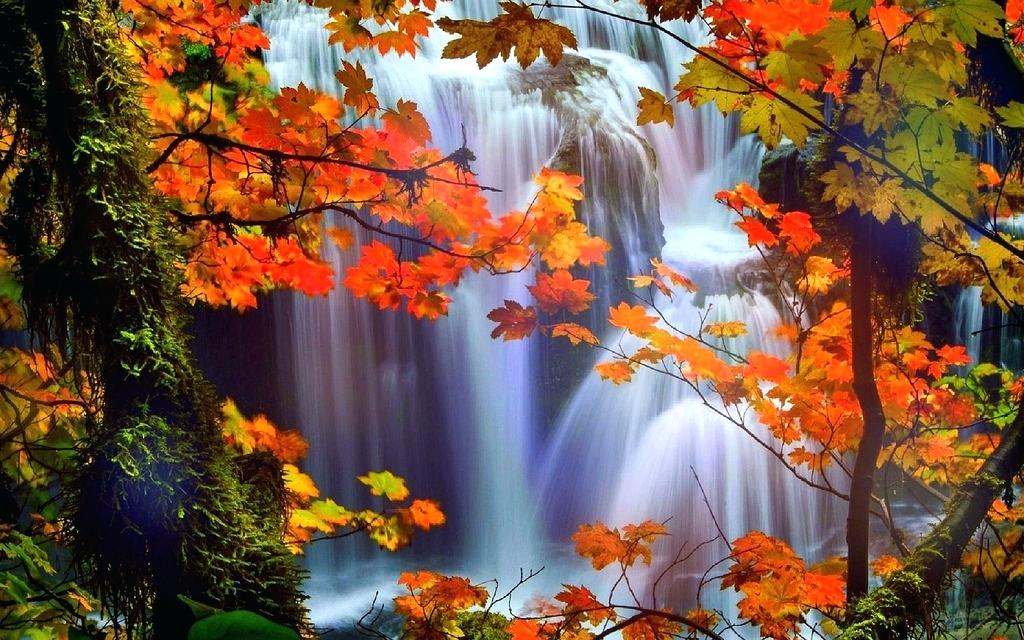 Nature Wallpaper Hd P Wallpapers Stock Images Free - Beautiful Trees In Fall , HD Wallpaper & Backgrounds
