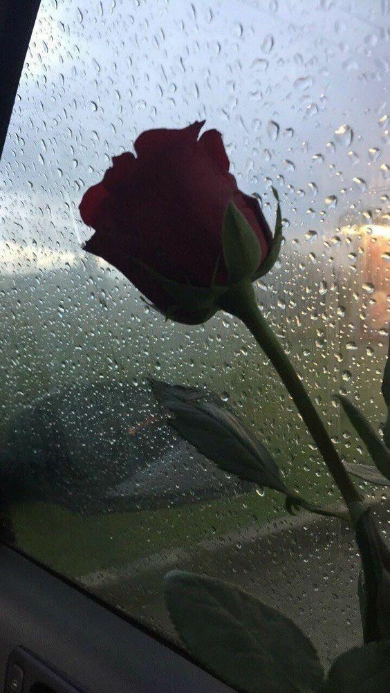 Wallpaper Bunga Hd Paling Cantik Rose And Rain 45290 Hd