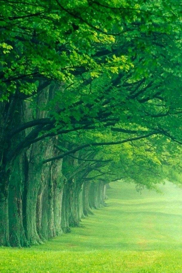 Love Natural Wallpaper Nature Wallpapers Nature Wallpapers