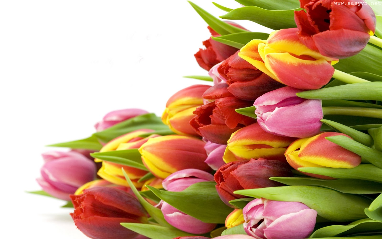 Tulips Images Wallpapers - Get Well Soon Flowers , HD Wallpaper & Backgrounds