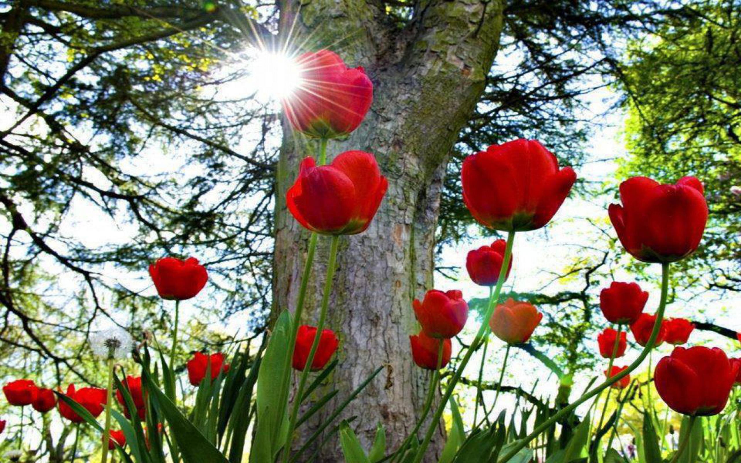 Beautiful Picture Desktop Background Widescreen Red - Desktop Background Flower Wallpaper Hd , HD Wallpaper & Backgrounds