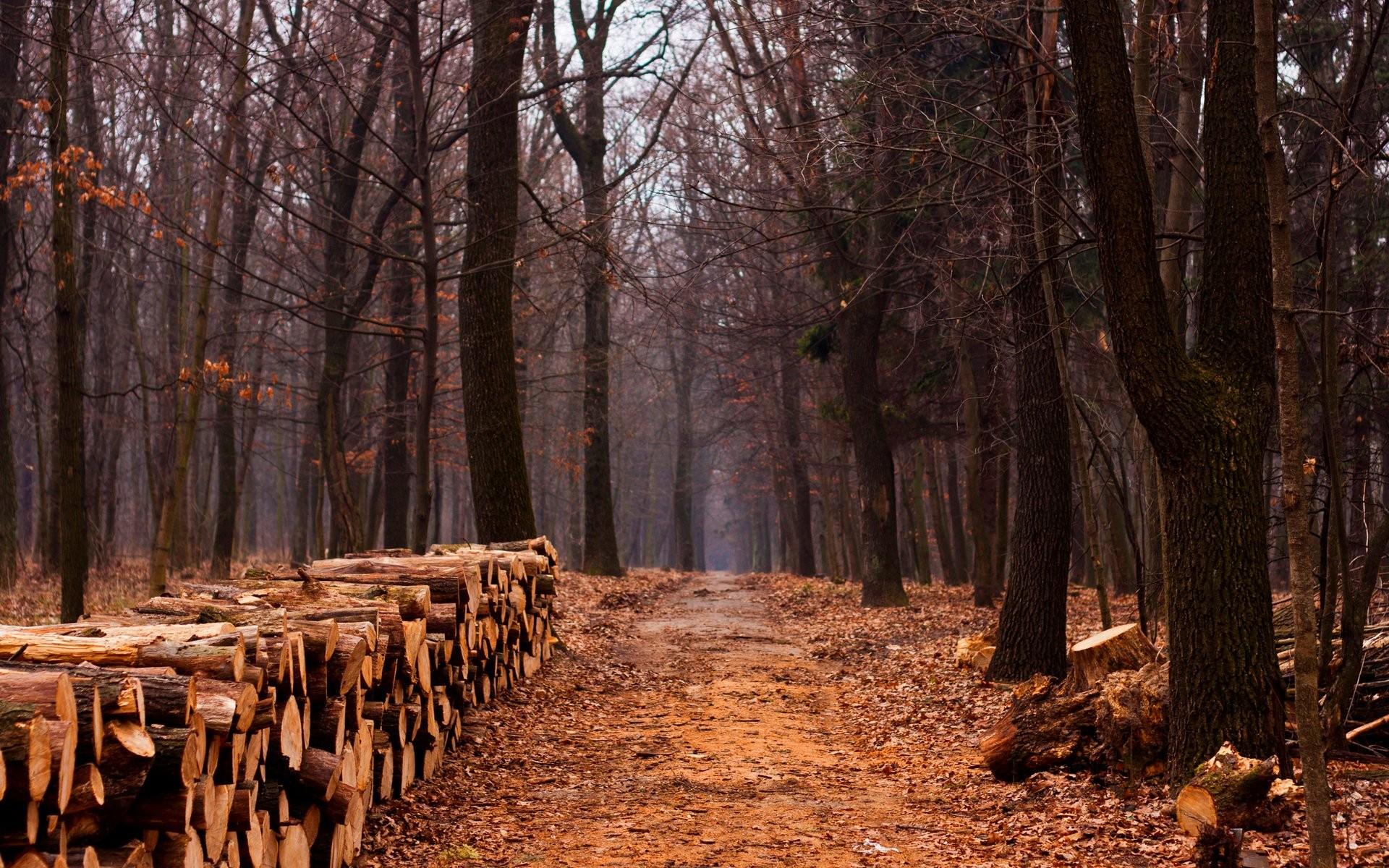 Forest Trees Peace Autumn Wallpaper Hd Landscape