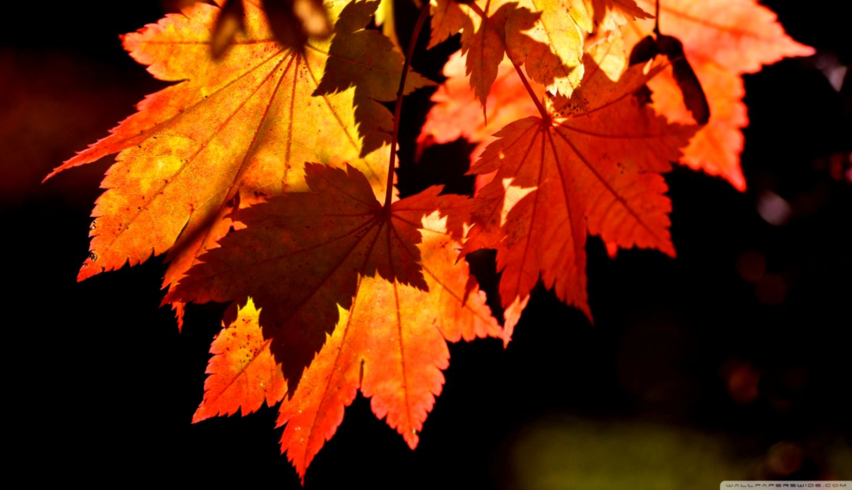 Autumn Fall Leaves Hd Wallpaper Hd Wallpapers Gallery - Autumn Leaves Wallpaper Hd , HD Wallpaper & Backgrounds