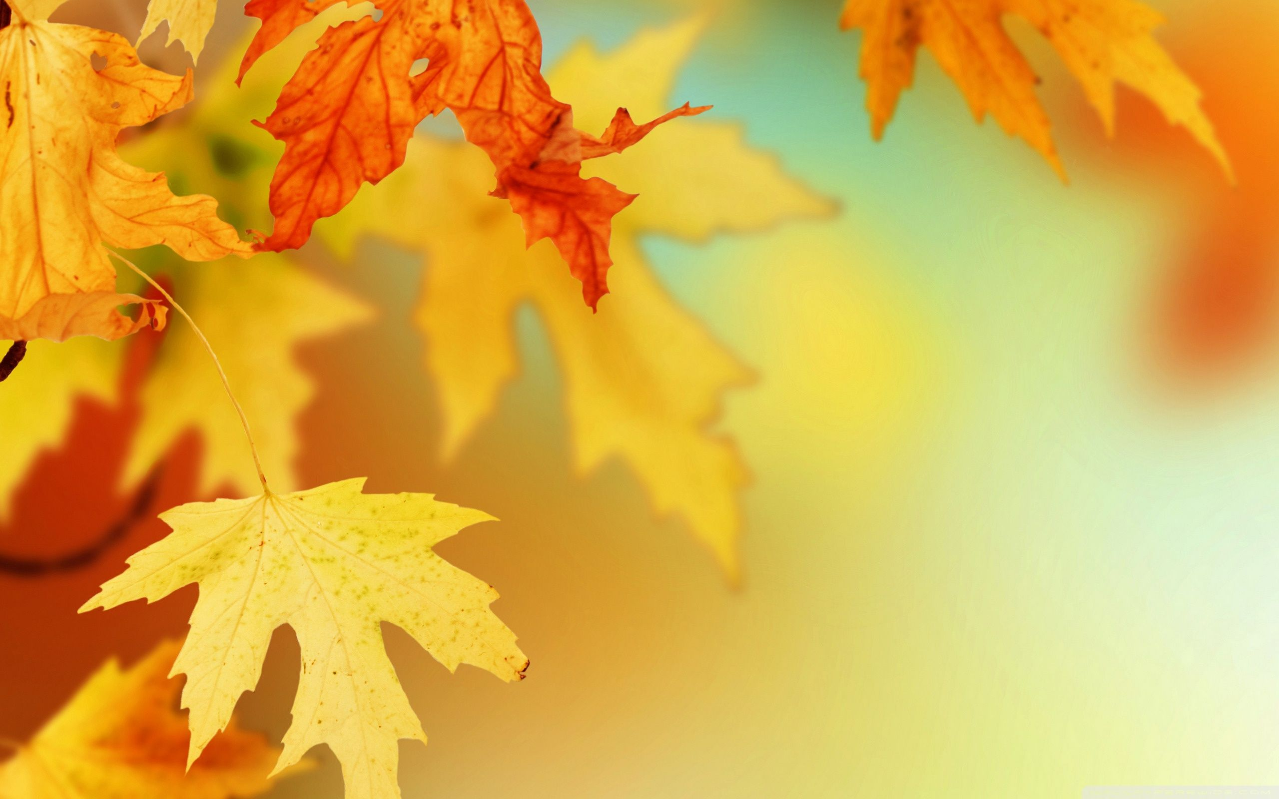 Free Fall Leaves Backgrounds 414307 Hd Wallpaper