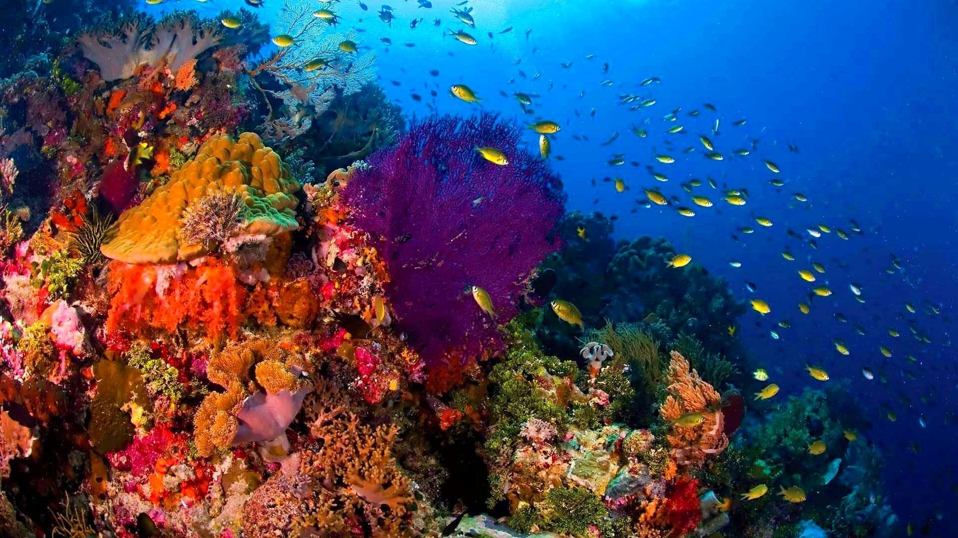 Fishes Sealife Sea Ocean Fish Nature Underwater Live Wallpaper