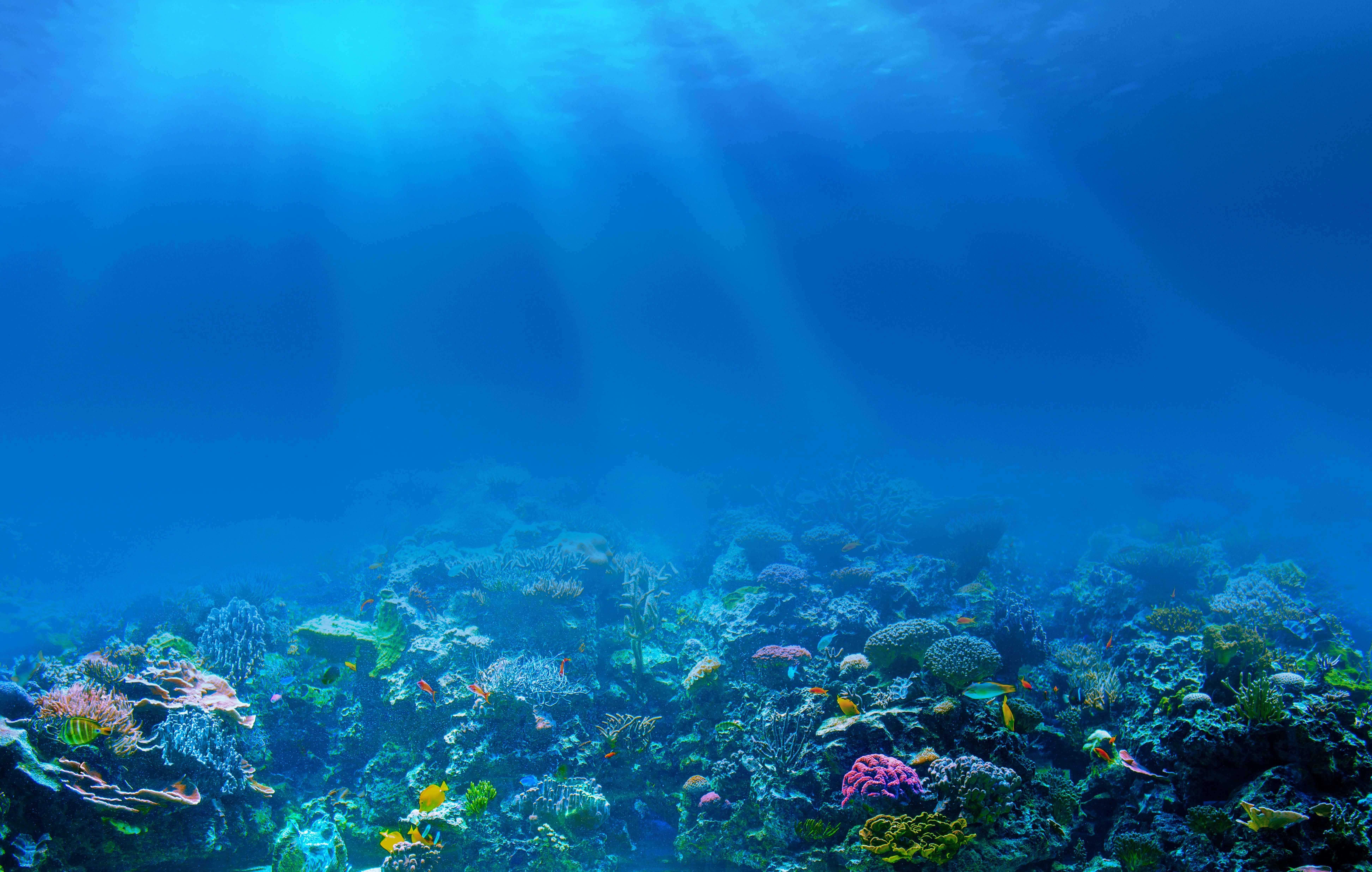 41 416265 live wallpaper hd full sea ocean underwater rays