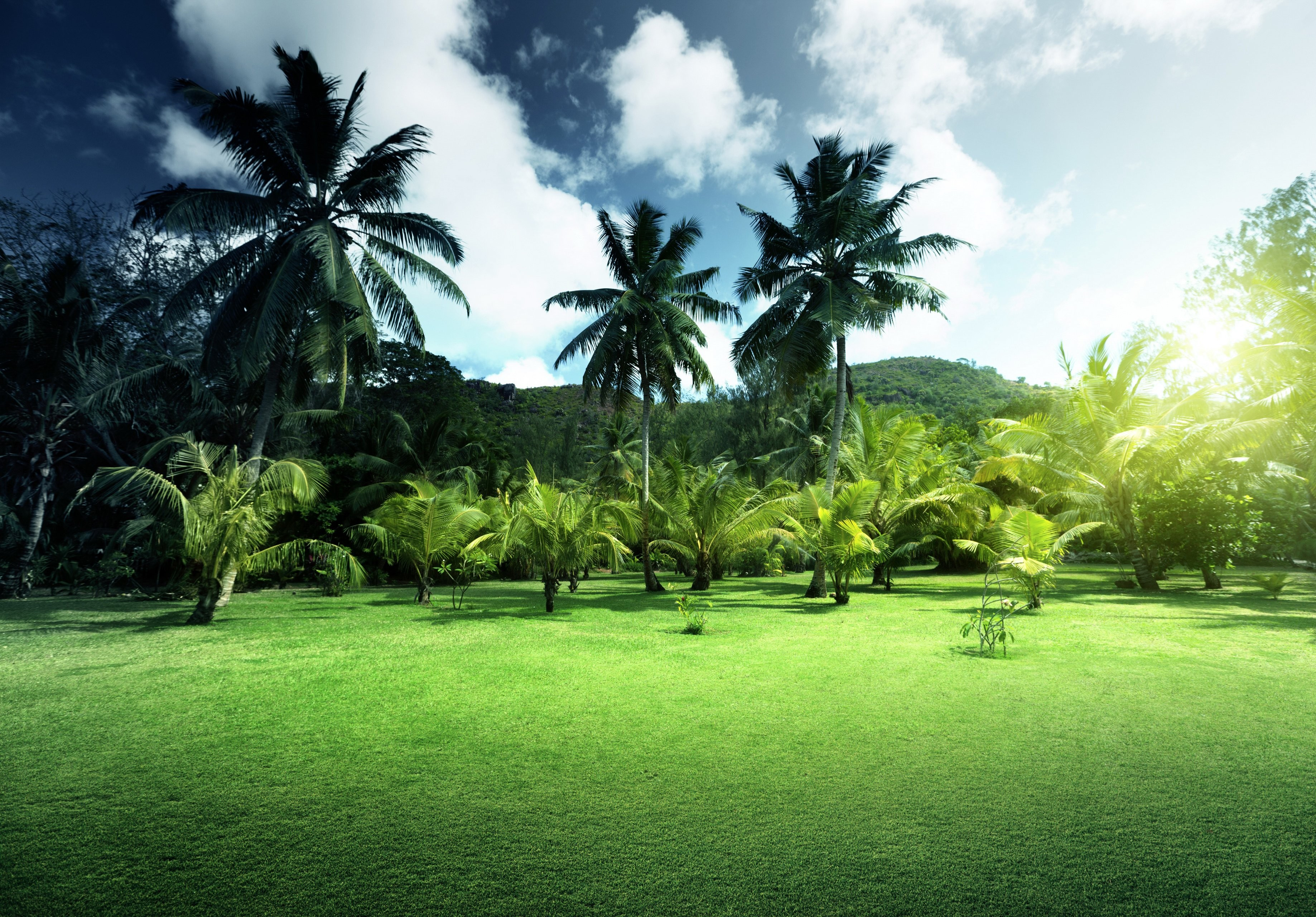 Landscapes Nature Palm Grass Scenery Sky Hd Latest - Grass Scenery , HD Wallpaper & Backgrounds
