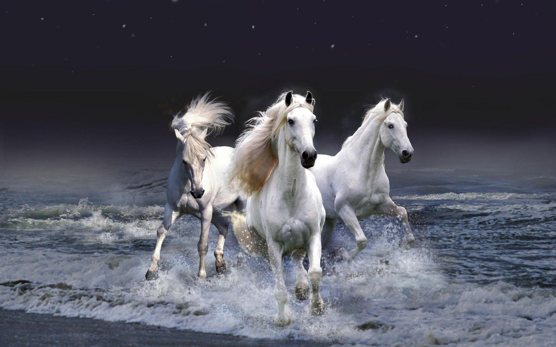 Download Free Running Horses Wallpaper Horse Hd Wallpapers 3d 428360 Hd Wallpaper Backgrounds Download