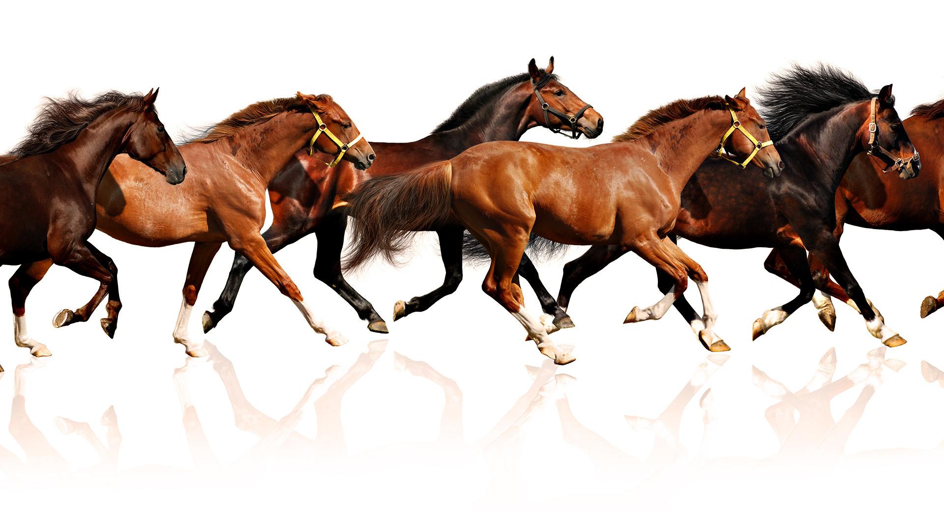 Running Horses Wallpaper 428858 Hd Wallpaper Backgrounds