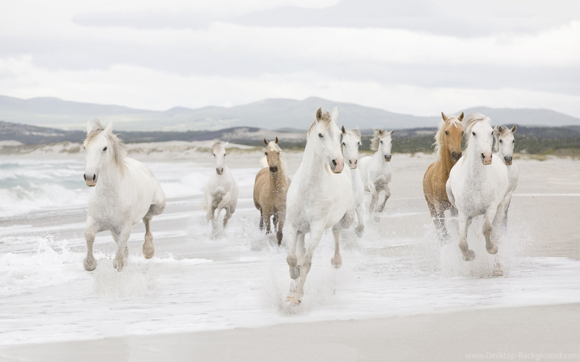 Trends For 7 Running White Horse Hd Wallpaper Images