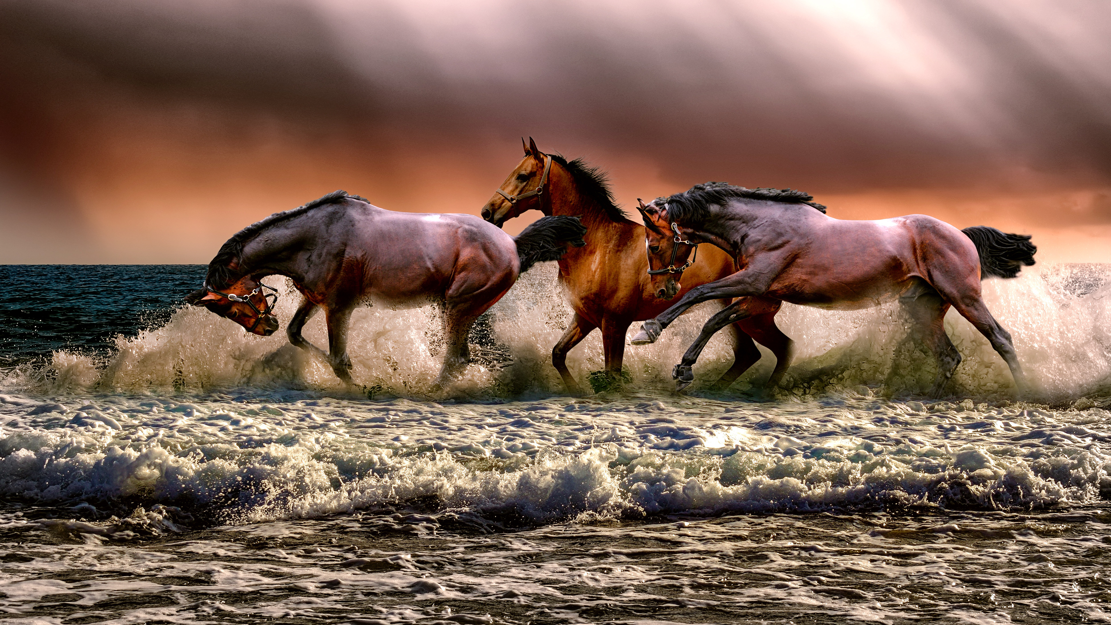 Running Horses Wallpaper Laptop Wallpaper 4k Download 429625 Hd Wallpaper Backgrounds Download