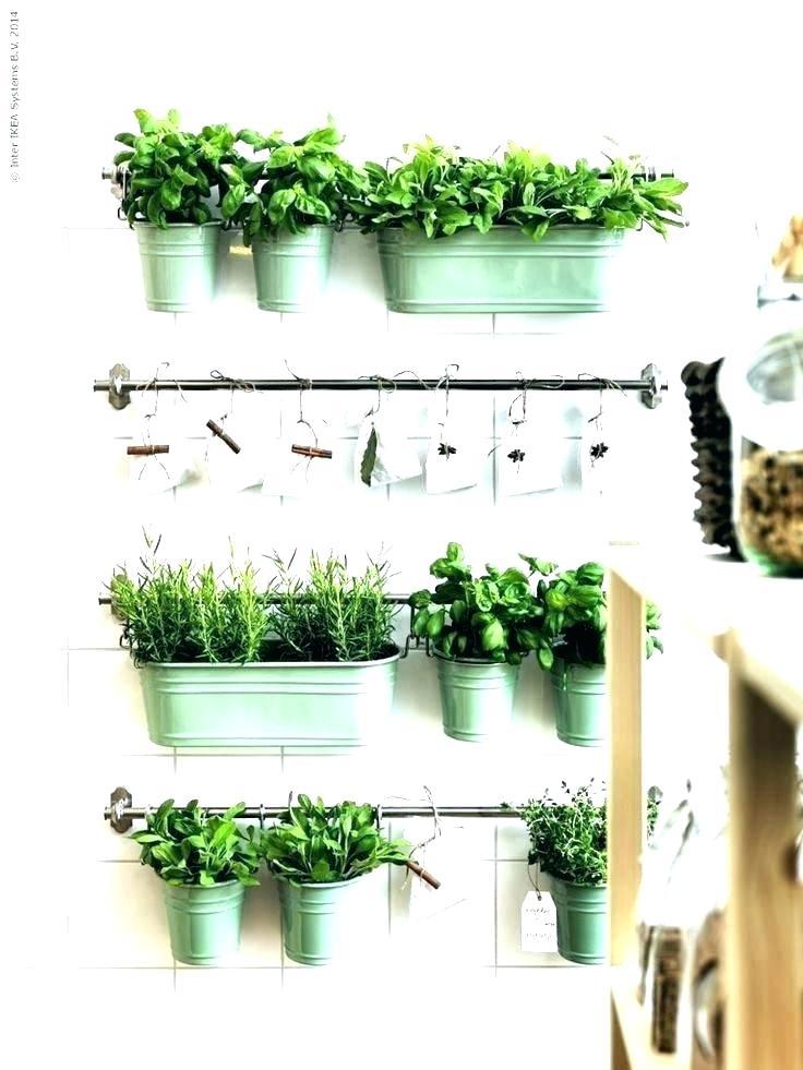 Wallpaper Borders Bunnings Herbs In Kitchen Ideas 429639 Hd Wallpaper Backgrounds Download