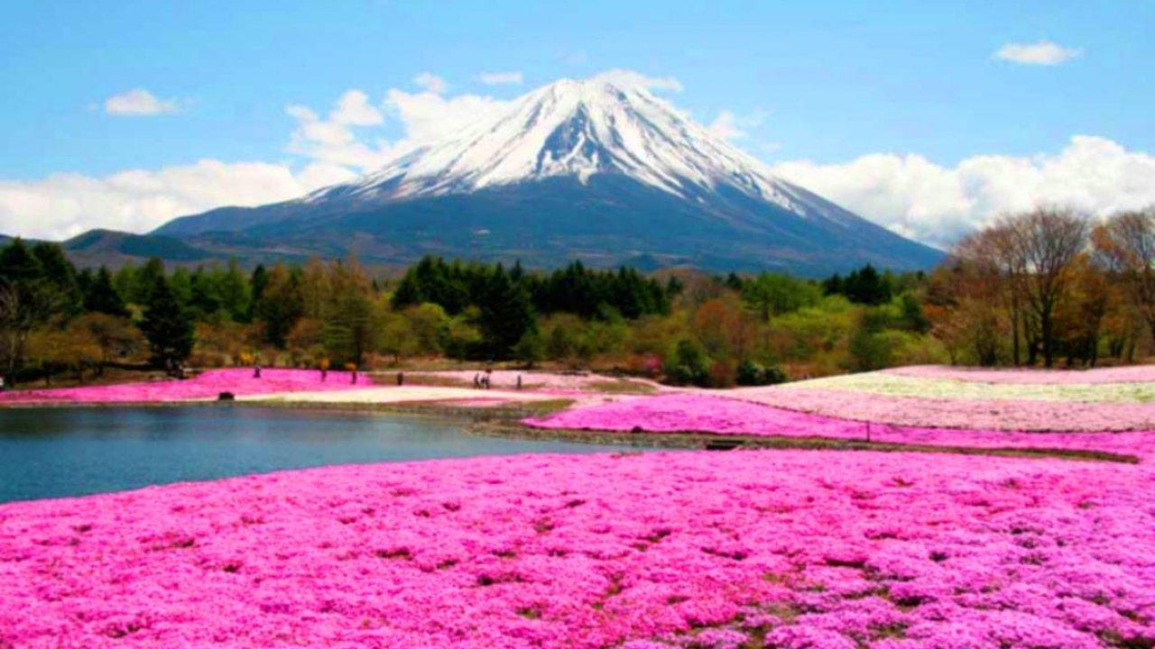 Beautiful Fields Of Flowers , HD Wallpaper & Backgrounds