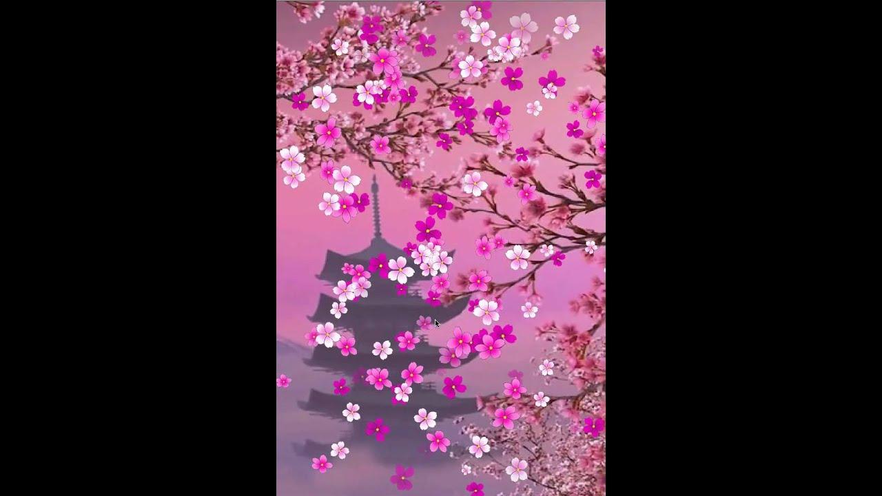 Sakura Live Wallpaper And Daydream - Cherry Blossom , HD Wallpaper & Backgrounds