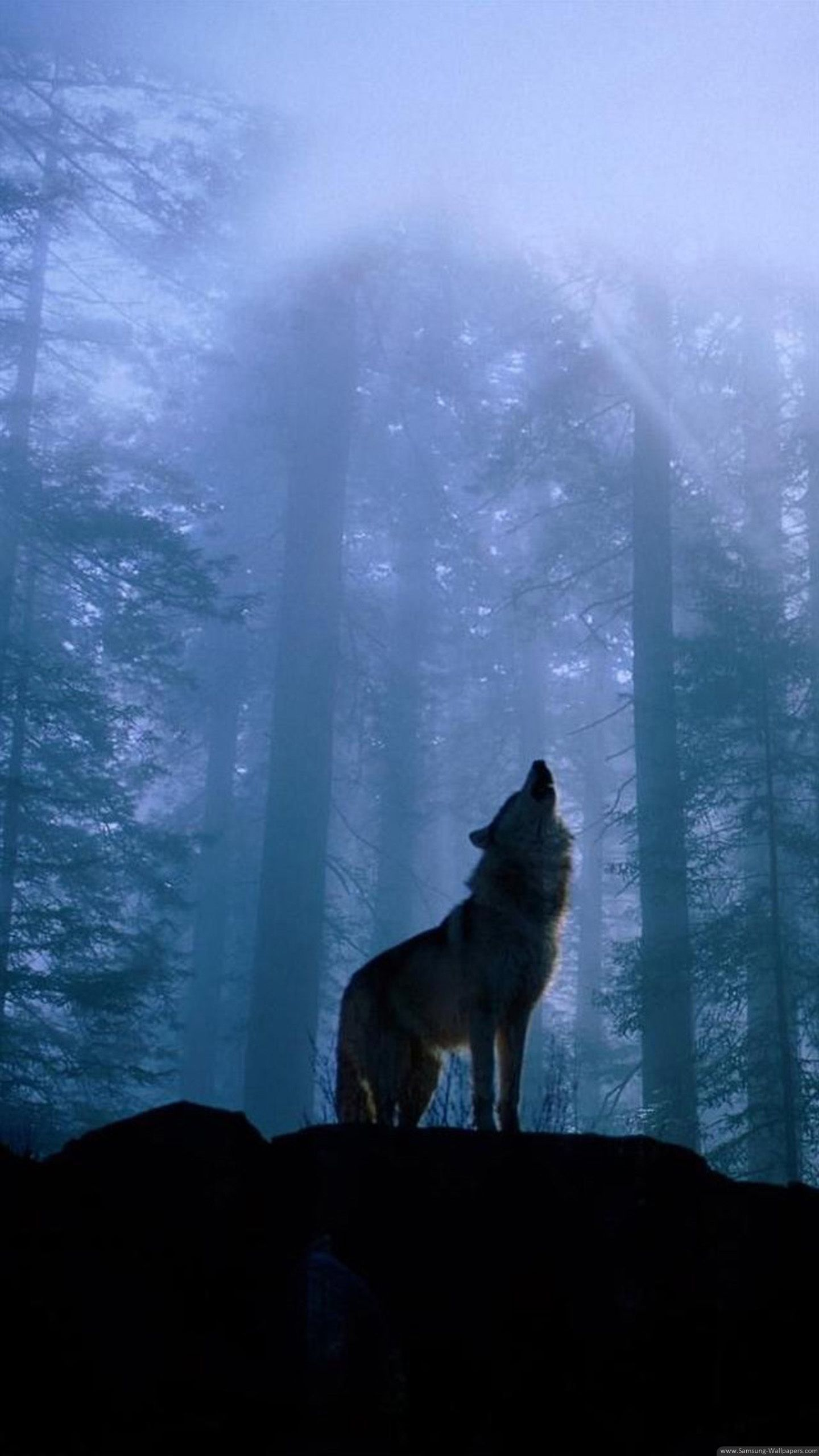80 Galaxy Wolf Wallpapers On Wallpaperplay - Iphone X Wallpaper Wolf , HD Wallpaper & Backgrounds