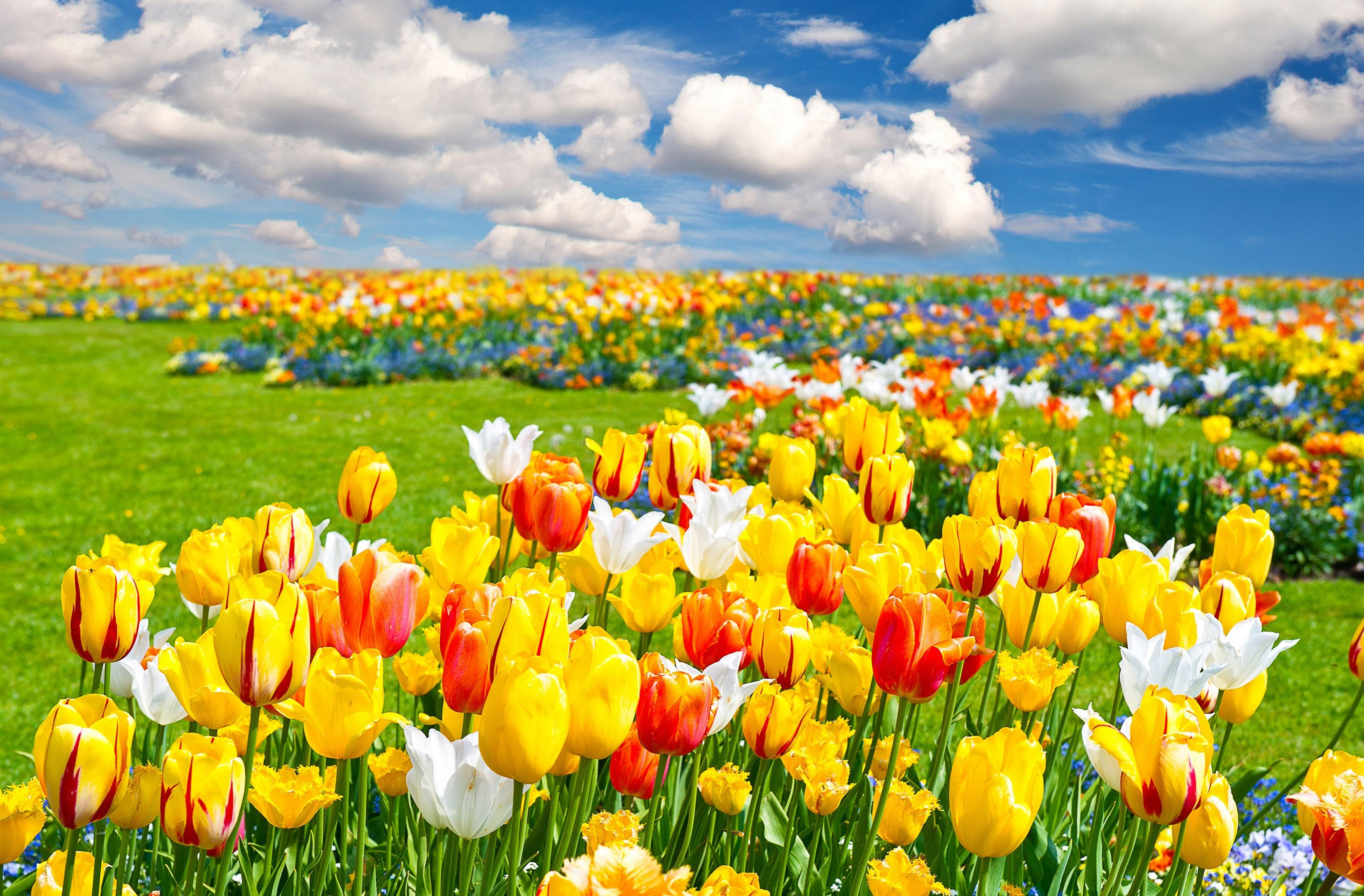 3d - Landscape Field Of Flowers , HD Wallpaper & Backgrounds