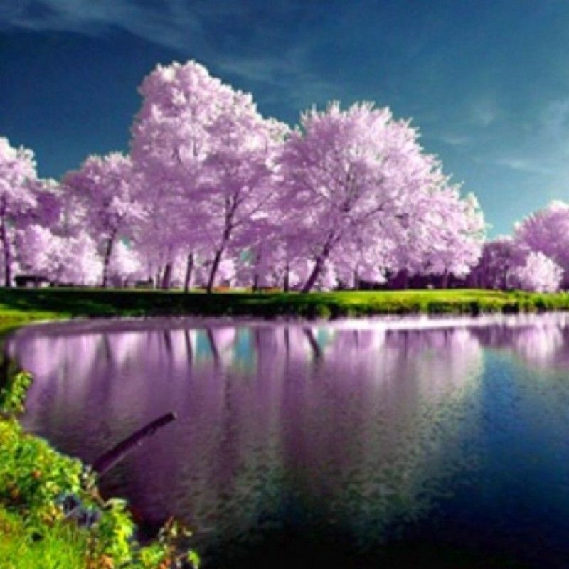 45 452572 10 latest spring nature wallpapers high resolution high